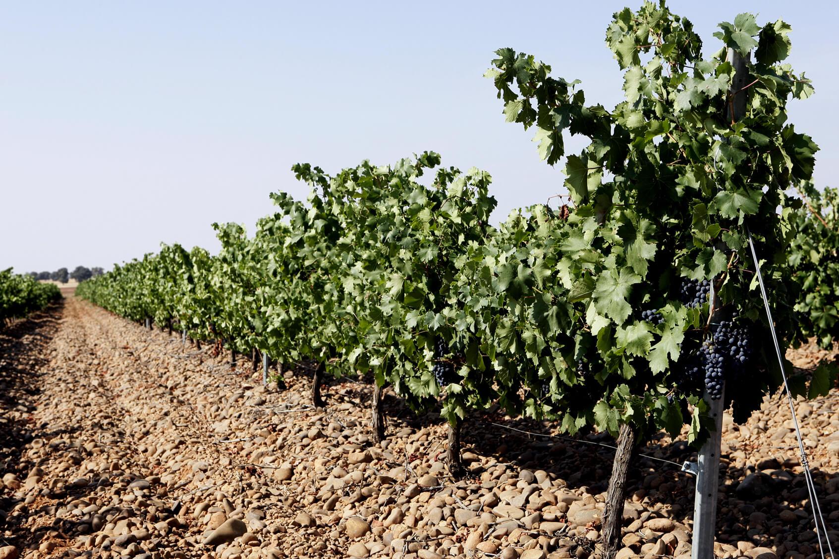 Rutas de la Viña y el Vino